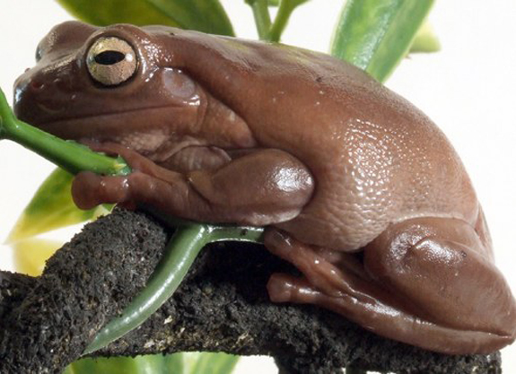 frogwatch3