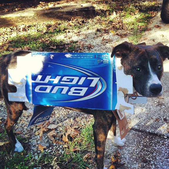 Halloween Pictures Photos Instagram Bud Light Dog