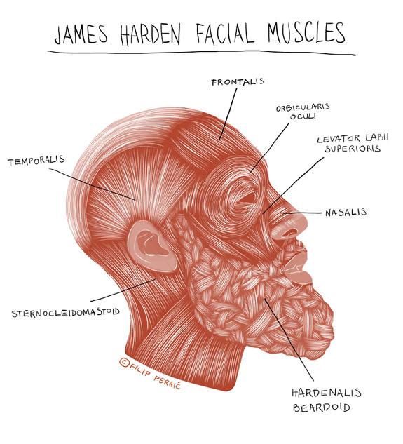 James Harden Illustrated Medical Illustration