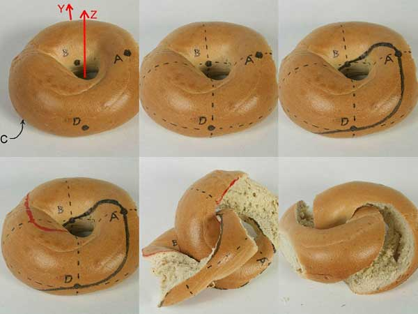 Mathematically Correct Way Slice Bagel
